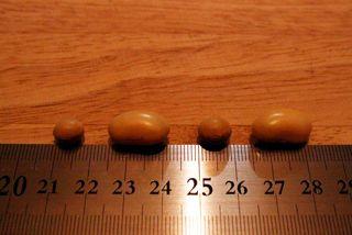 大豆サイズ比較.jpg